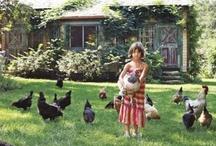 Chickens / by Kecia Beltz