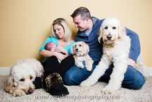 Photography | Family Pets / by Lindsey Schwimmer