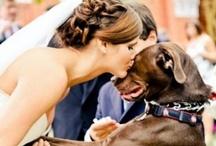 Wedding / by Megan Waggener