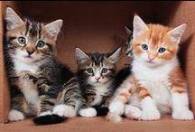 Kittens / by Tamar Arslanian