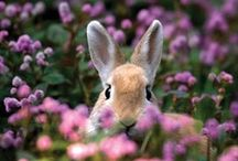 Hippity Hop Hop / Easter recipes, decorations, and lots of bunnies!! / by Emery Hamami