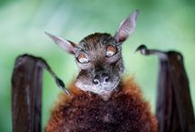 creatures. / so cute i could die. & then die again. / by ellie jean o'hale