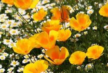 Gardens / by Nancy Lauder