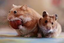 Cute Animals :D / by Maria Lamas