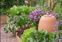 Potager - Verger : legumes, plantes aromatiques, fruits et fleurs commestibles / by Marie Helen