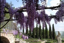 Gorgeous Wisteria  / by Marie Helen