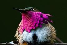 Birds (pajaros) / by Lorena Angulo
