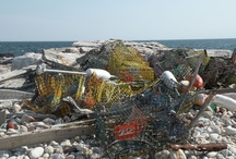 Marine Debris / by Gabriela Bradt
