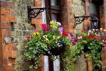 Hanging baskets / by Homebase UK