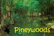 East Texas Pineywoods / by Judy Ayers