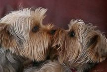 Dogs, Dogs, Dogs / ALL THINGS DOGS & PUPPIES ps...if you couldn't guess, I'm owned by my Yorkie, Harley! / by Barbara Burr