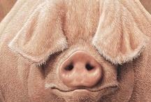 Animals, Animals, Animals / all God's beautiful creatures / by Barbara Burr