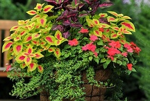 Flowers, Plants, Shrubs & Great Tips / by Barbara Burr