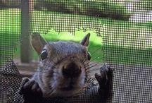 Just Squirrels / So cute / by Barbara Burr