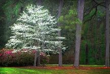 Trees, Trees, Trees / by Barbara Burr