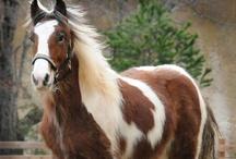 Horses 2 / by Barbara Burr