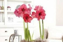 Beautiful Blooms / by National Home Gardening Club