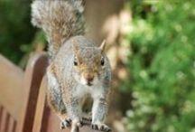 Wildlife / by National Home Gardening Club