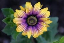 Mardi Gras - Yellow, Purple and Green Inspirations / by National Home Gardening Club