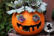 Fall  / by National Home Gardening Club