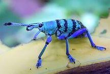 Insects / by Li Romero