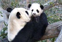 panda pins  / by Amanda Conley