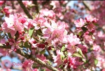Spring Flowers / Celebrating spring one flower at a time! / by Own Skin Health