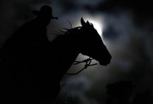 horses / by Eleanor Taniguchi