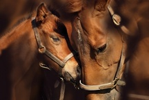 Animals and Pets:  Horses / by Monette McNaughton