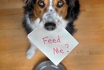 Feed Me / by Cara Hartley