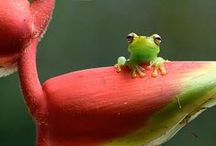 Frogs / by Beverly Davis