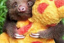 So freaking cute  / by Caitlin Dunn