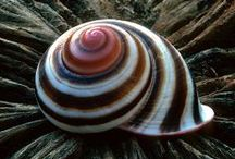 Beachcomber: seashells / by Monette McNaughton