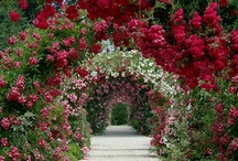 "Great Gardens & Ideas / Welcome to this Community board! Pin your favorite garden pictures, landscape designs, outdoor elements, vegetable gardens, plant photos, farm pictures, roof top gardens and botanical art! PLEASE NO MORE THAN 10 PINS AT A TIME and no travel photos. Garden only!  ① To Pin to this community board, you must follow the board and please write me a message on my latest pin ② Please add other great pinners by going to ""edit"" on the board and send them an invite! Enjoy!       Mary Ann / by Mary Ann Rounseville"