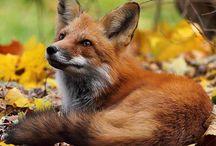 Beautiful Beasts:) / by Kim Williams