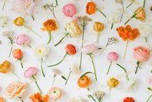 Flora / by Jordan Ferney | Oh Happy Day!