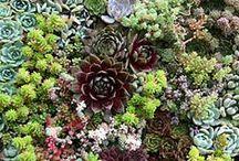 Gardening Tips / by Sunset Magazine
