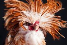 Here chick, chick, chick / by Bonna Shook