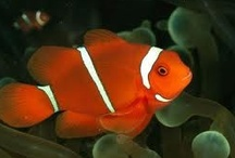 Beautiful Fish / by Danice Gentle