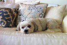dogs / by Desleigh~downunder~Australia ....