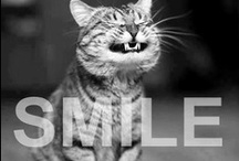 Smile / How can you not? / by Hannah Roycroft