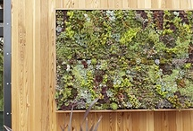 Make your own living succulent art / by Rent to Own. ph
