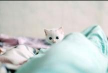 Kitties / by Cara Mengel