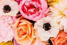 Beautiful flowers / by Canaan Byrd