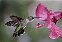 For the love of birds / by Tara Martin