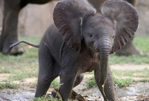 Animal...Elephants / by Jewel Johnson