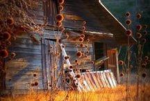 Barns / by Sheila Ridgway