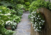 MOONLIT WHITE GARDENS / by Mary C