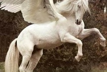 MAGICAL UN ICORNS AND PEGASUS / by Mary C
