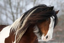 MAJESTIC HORSES / by Mary C